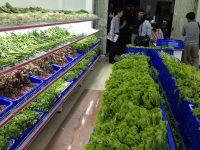 Kệ chuyên dụng cho cửa hàng rau sạch